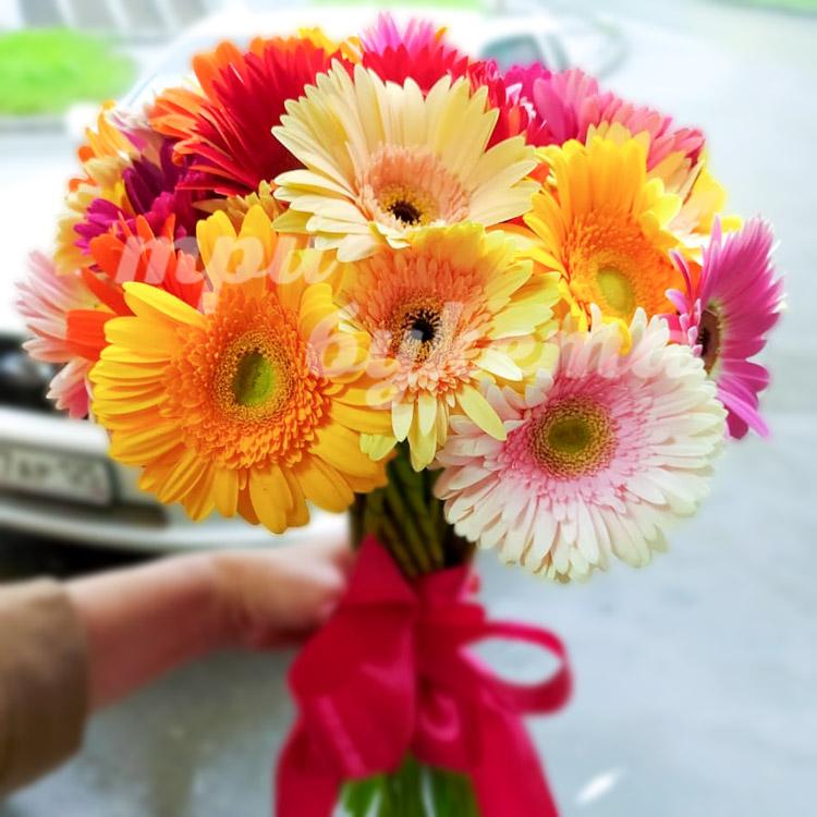 Цветы герберы купить пермь — 2